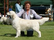Golden udstilling excl 2nd winner, 4th best dog