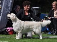 Joe 1st winner Open Class - 2nd Best dog - Rersv.CAC