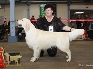 GRC Cloppenburg 26.11.11 - Excl. 1st winner Champion Class, CAC, 2nd best dog